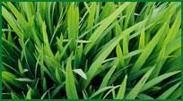 Sobre a grama