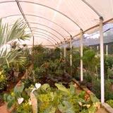 Grama Natural e Acessórios para Jardinagem